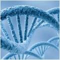 Как здоровый образ жизни действует на генный код